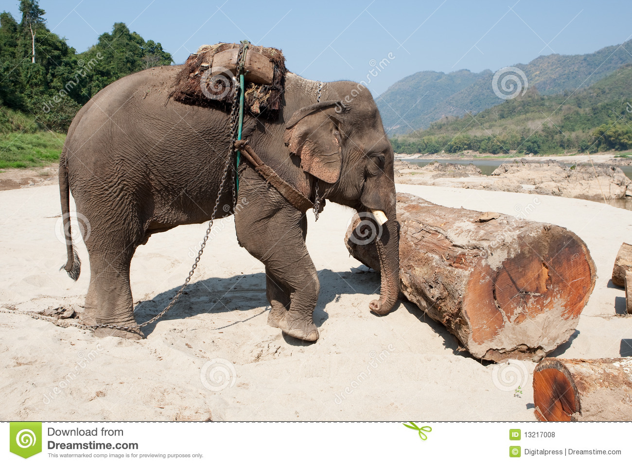 Working Elephant Royalty Free Stock Photos