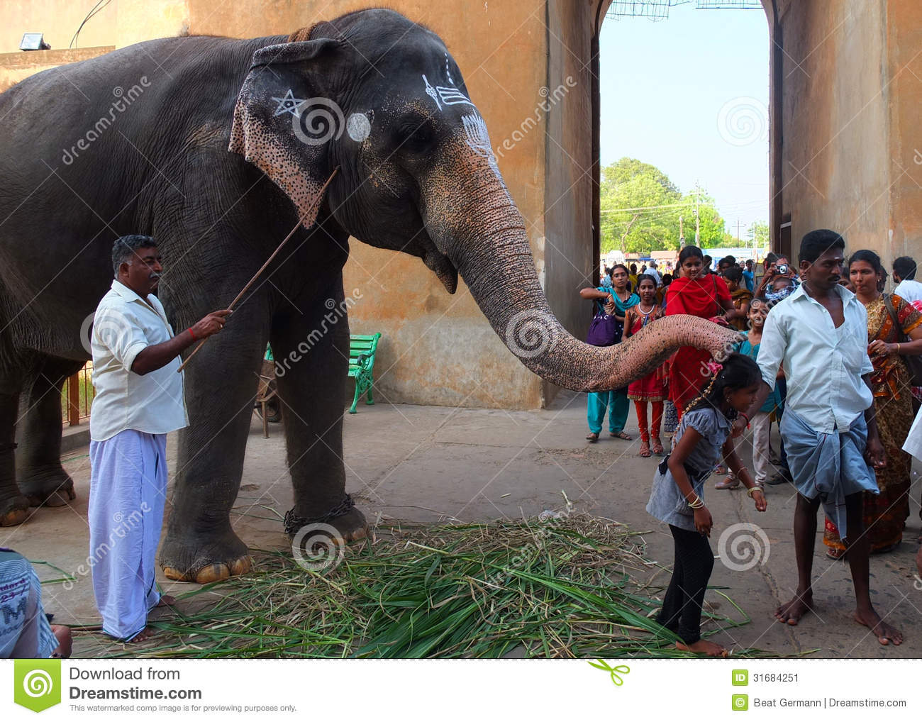 Working Elephant At Temple Kerala India Editorial Photo