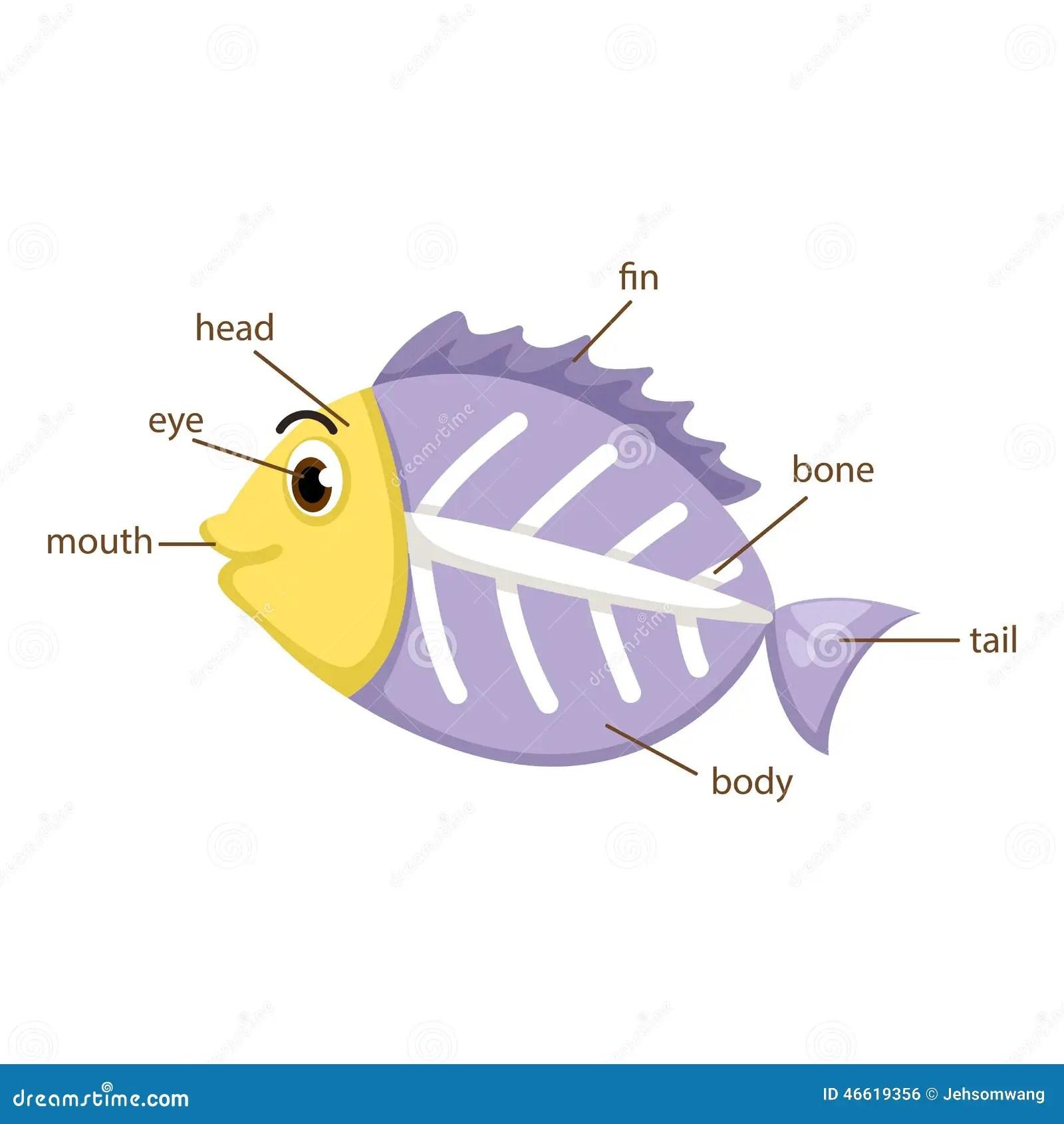 X Ray Fish Vocabulary Part Of Body Vector Stock Vector