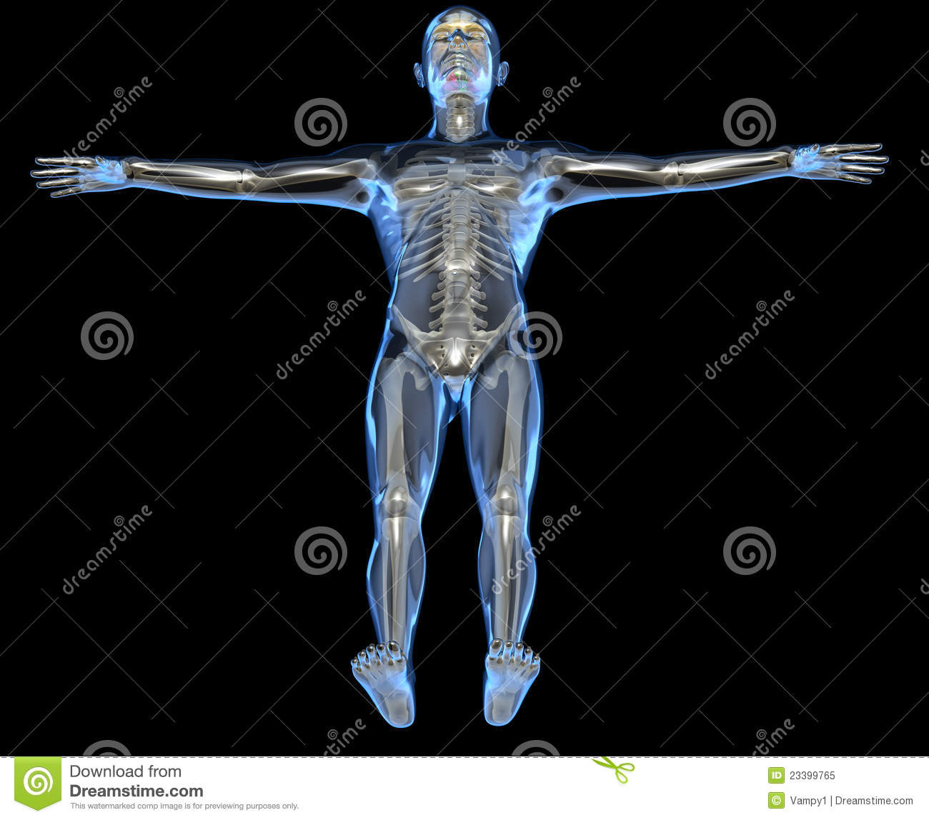 X Ray Of A Human Body Royalty Free Stock Photo