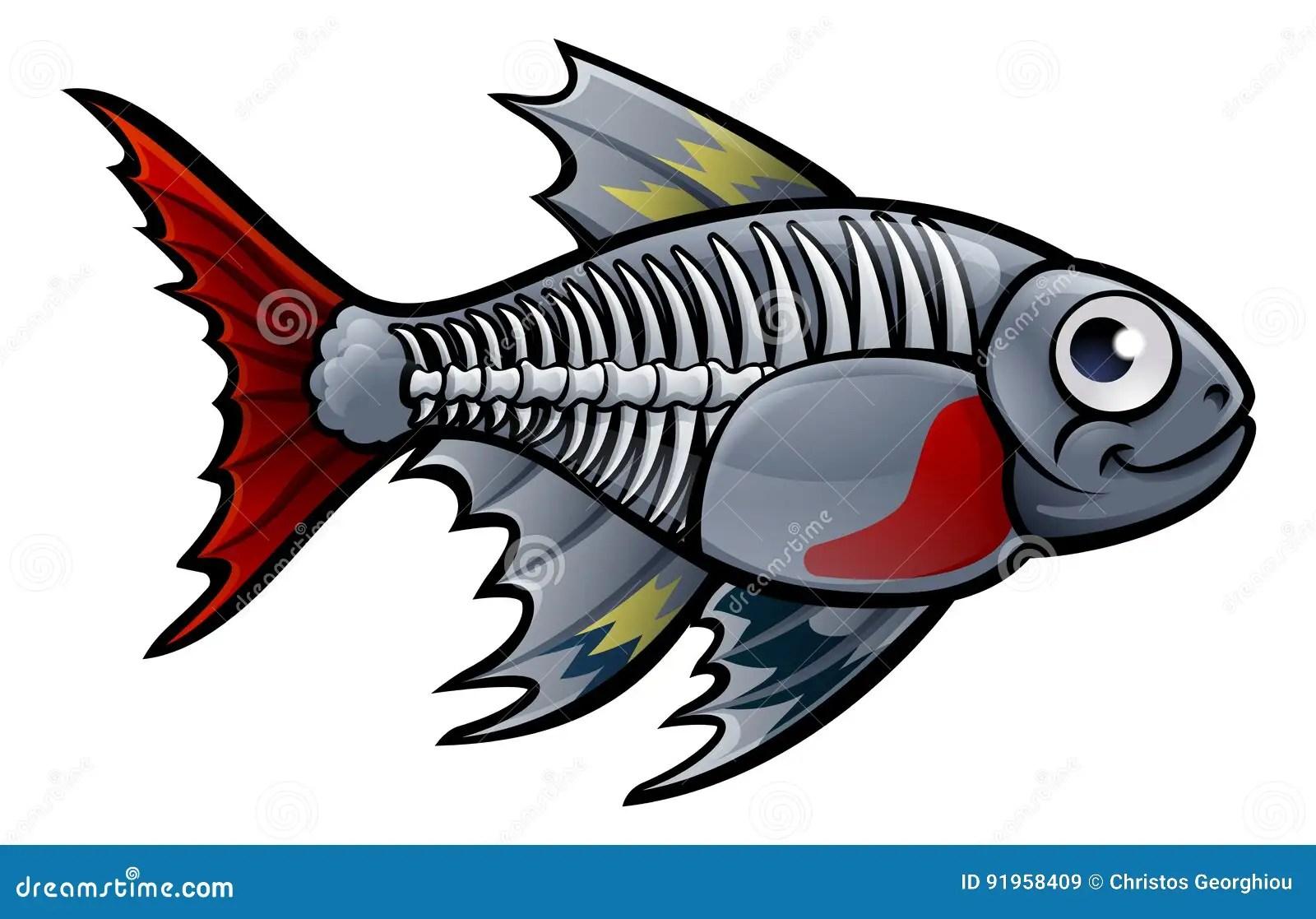 Xray Fish Stock Illustrations 104 Xray Fish Stock