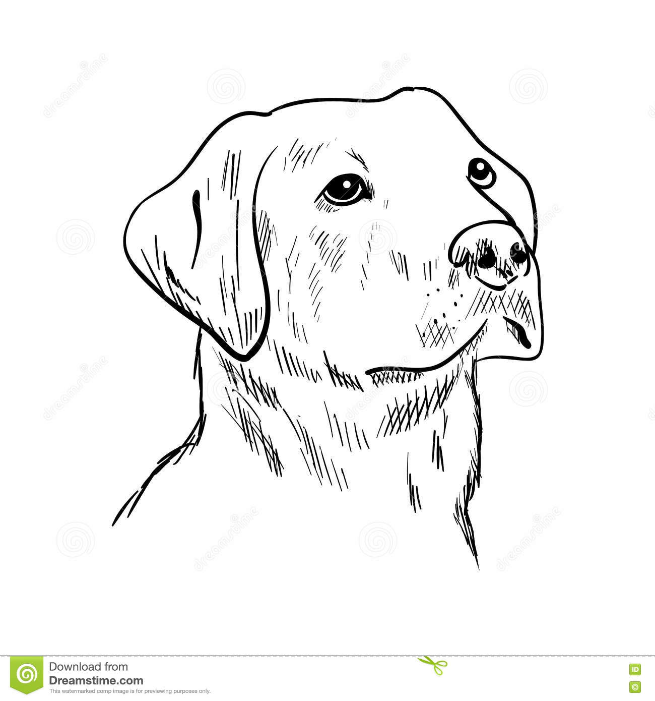 Yellow Lab stock illustration. Illustration of face, sign