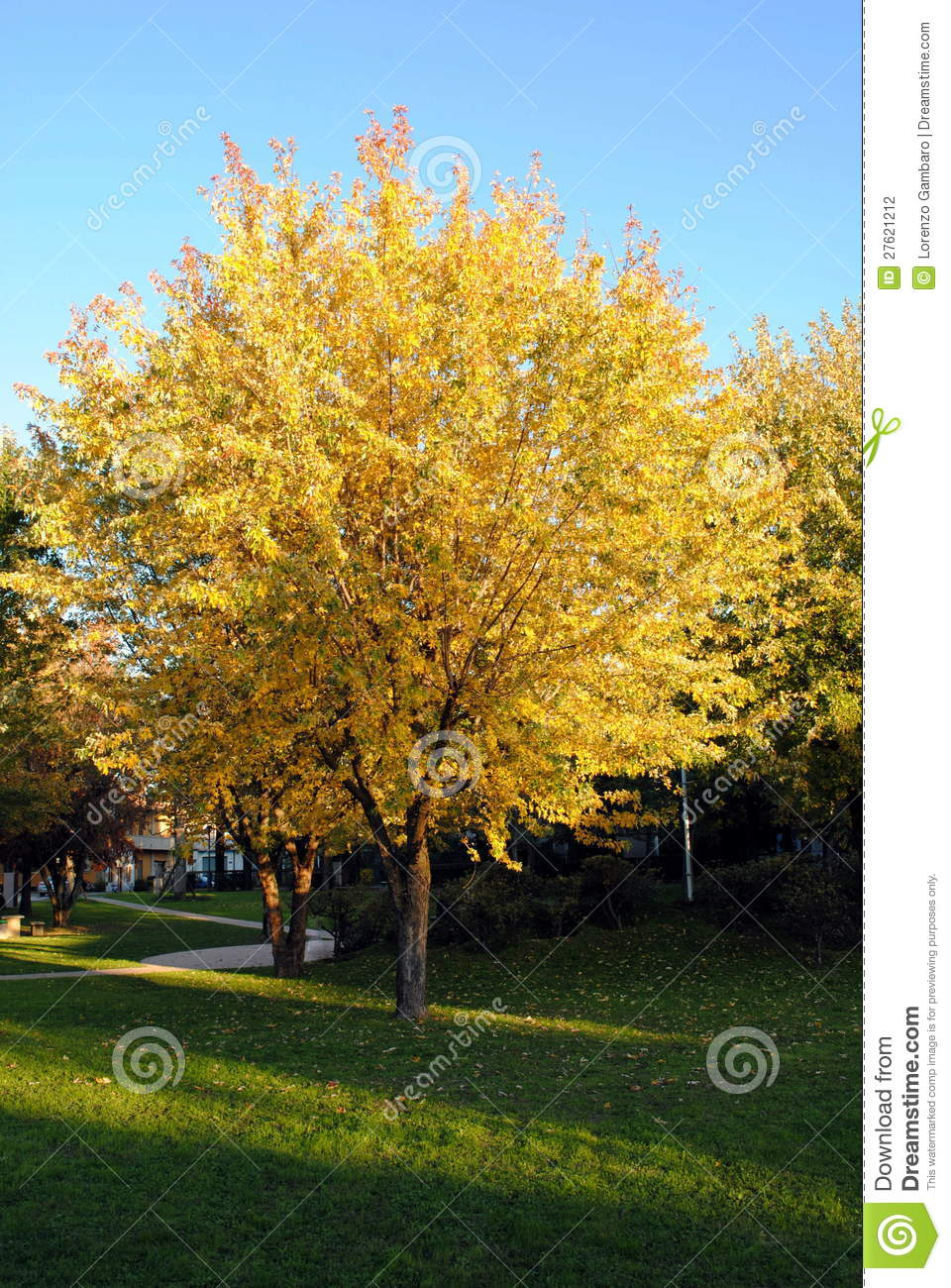 Colorful Fall Scene Wallpaper Yellow Leaves Tree Stock Photography Image 27621212