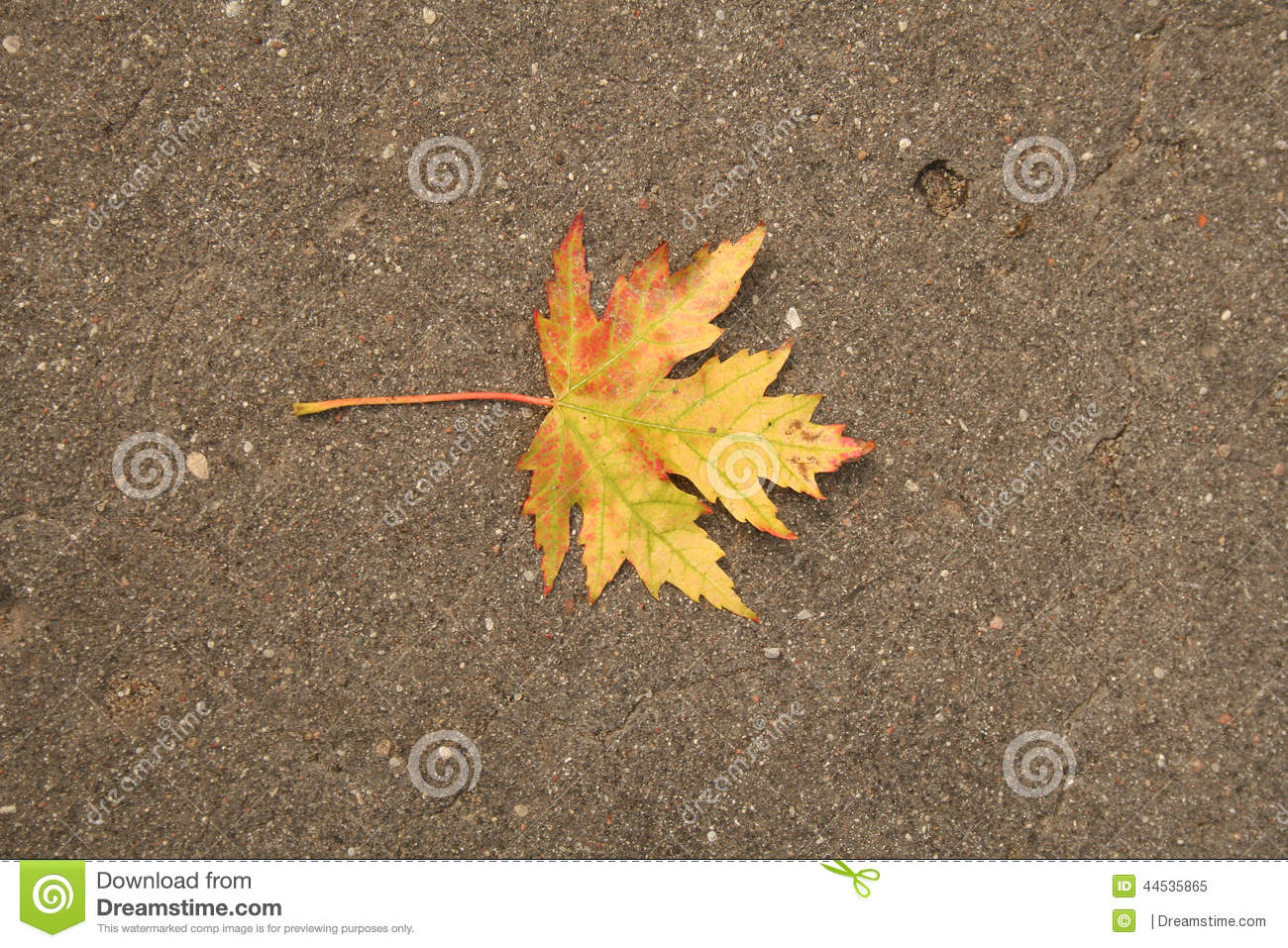 Yellow Red Autumn Leaf Stock Image Image Of Looks
