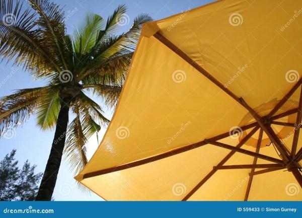 Yellow Umbrella Palm Tree Stock - 559433