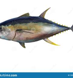 yellowfin tuna fish isolated on white background [ 1600 x 1226 Pixel ]