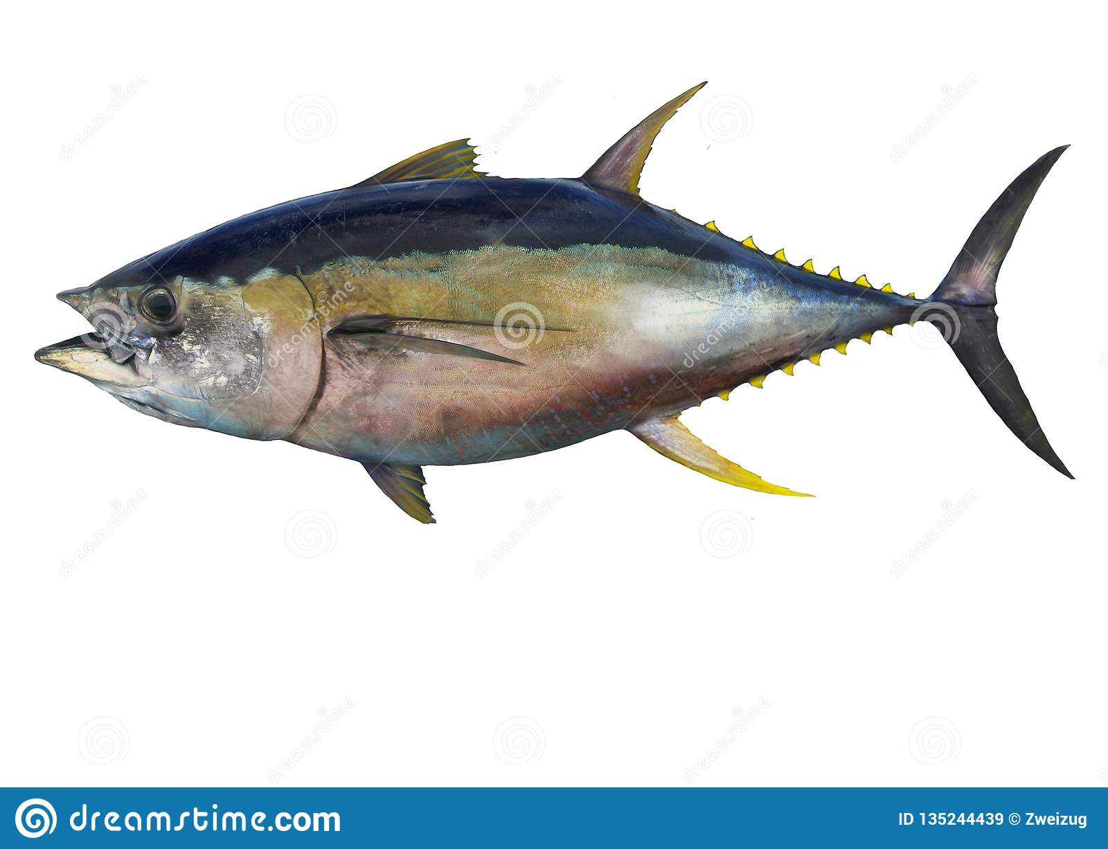 hight resolution of yellowfin tuna fish isolated on white background
