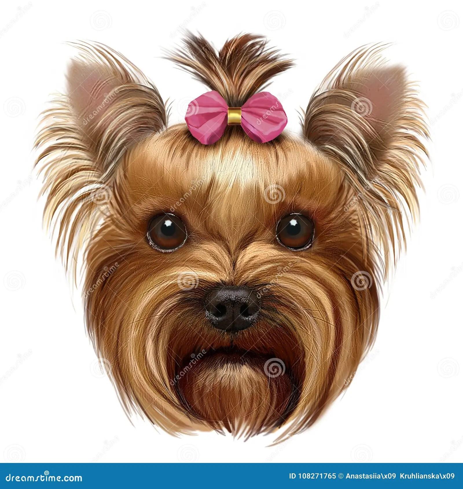 Download Wallpaper Of Cute Puppies Yorkshire Terrier Com Curva Cor De Rosa Imagem De Stock