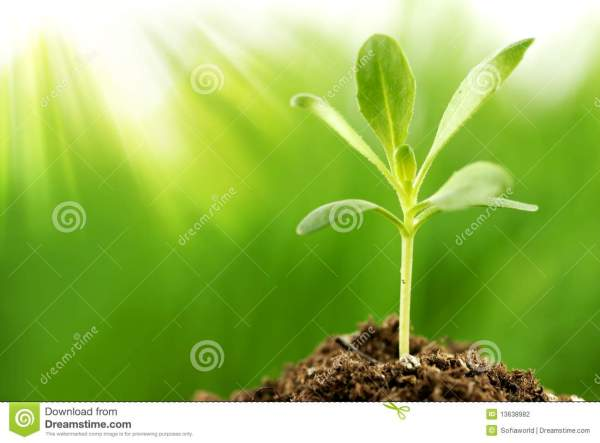 Young Plant Growing In Sunshine Stock - 13638982