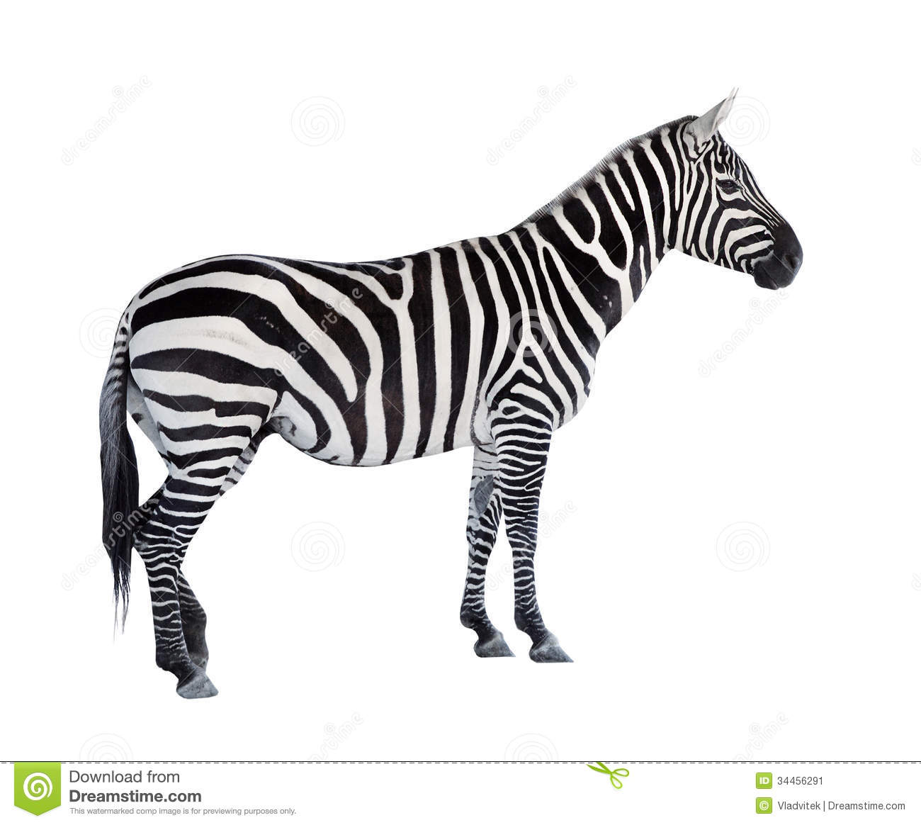The Zebra Stock Image Image Of Icon Object Background