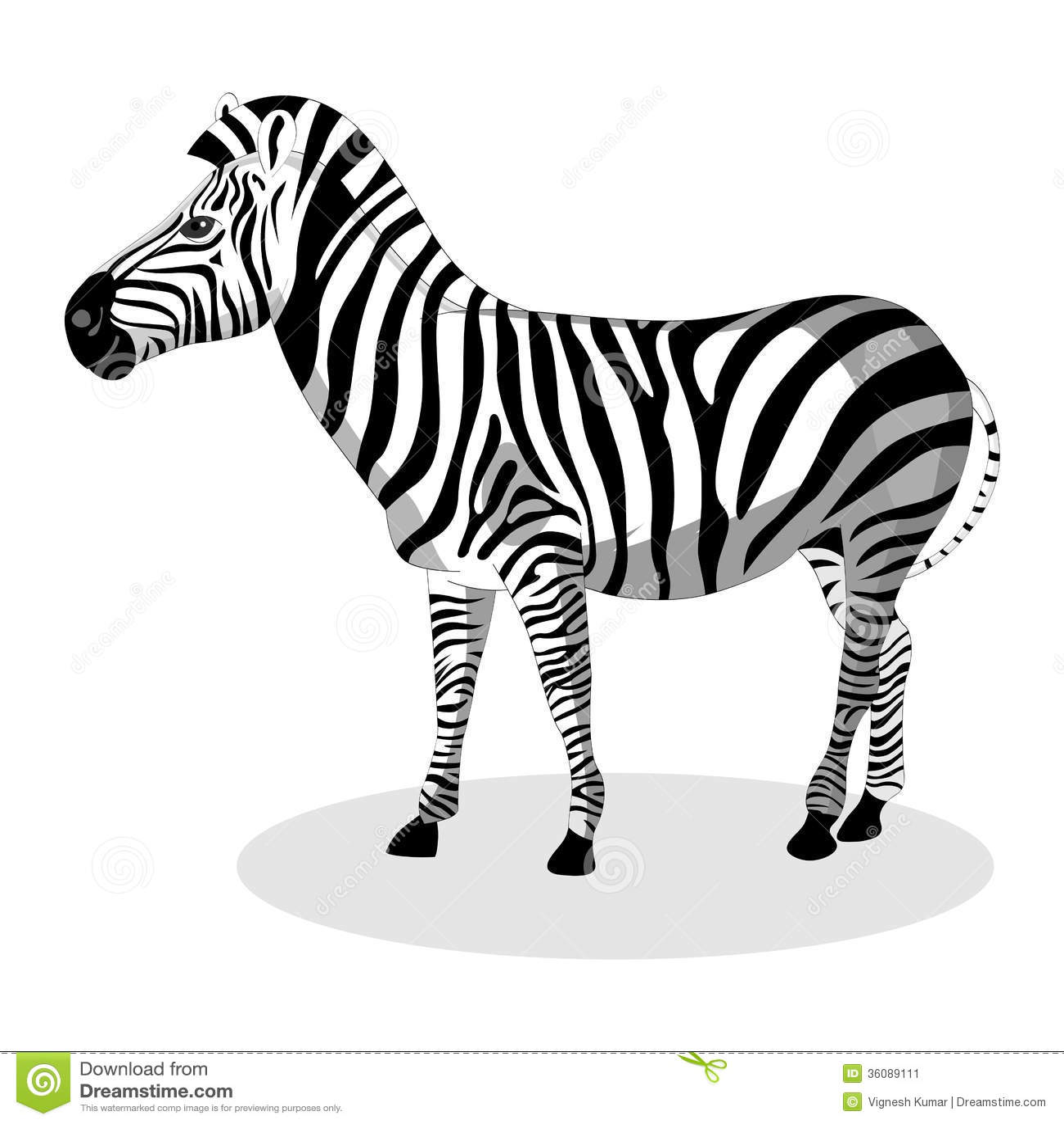 Zebra Cartoons Illustrations Amp Vector Stock Images