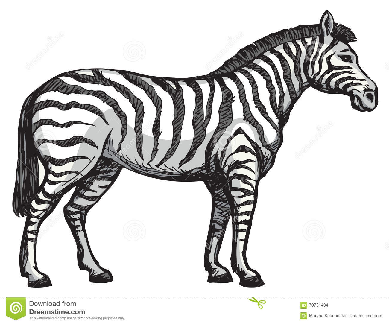 Zebra Vector Drawing Stock Vector Illustration Of Body