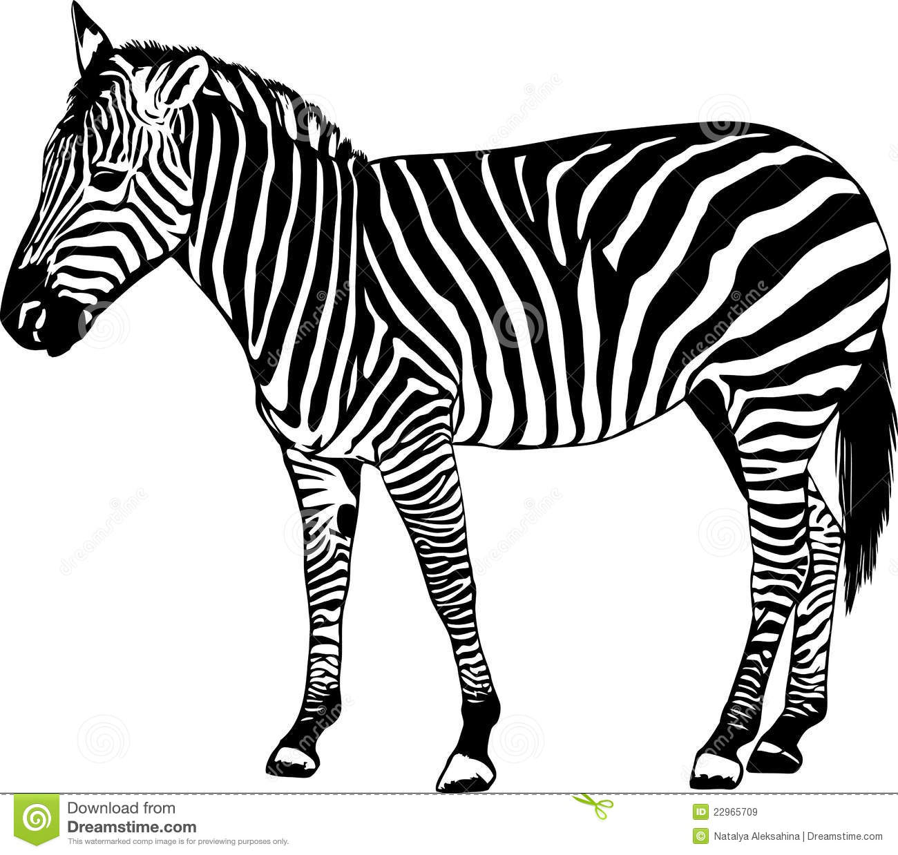 Zebra Vector Illustration Stock Vector Illustration Of