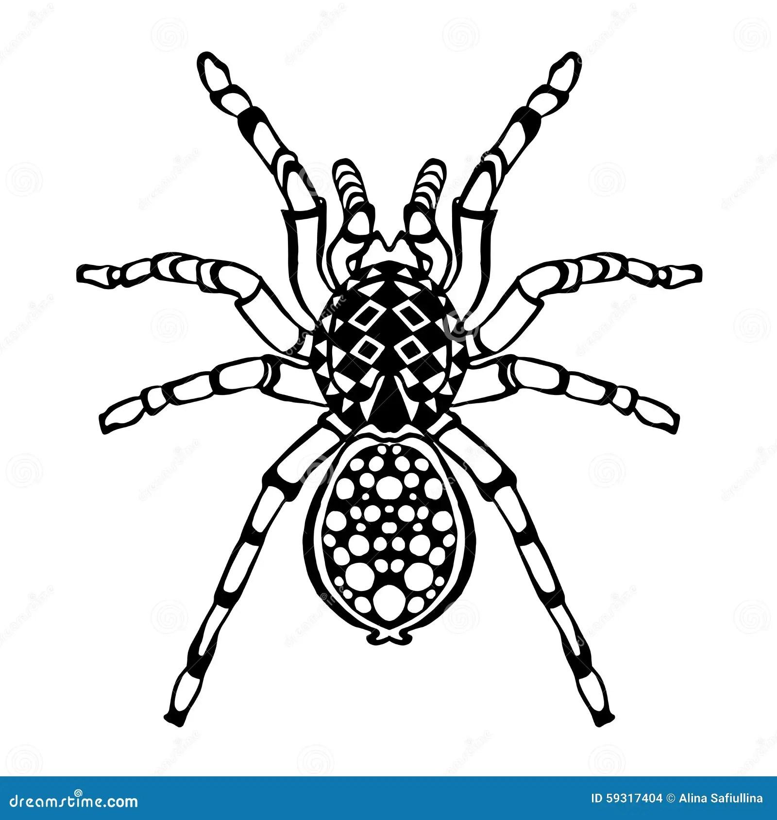 Zentangle A Stylise L Araignee Croquis Pour Le Tatouage Ou