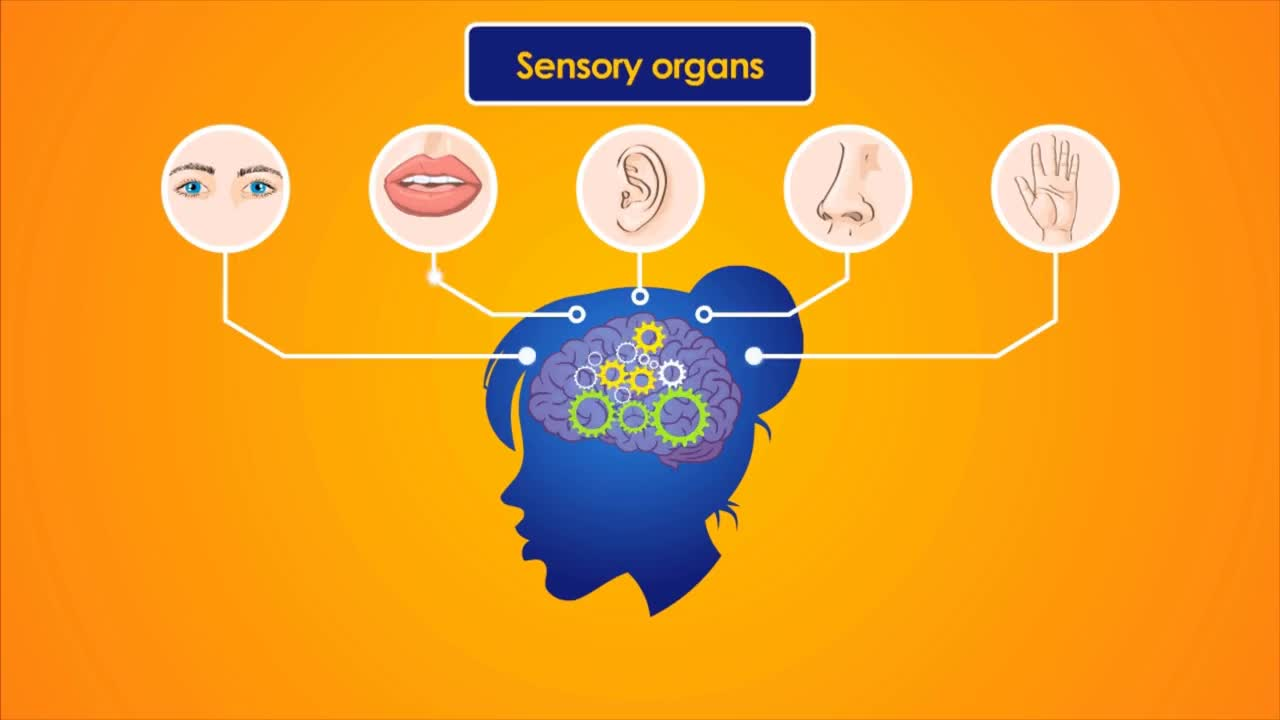 hight resolution of the nervous system educational videos for kids gif