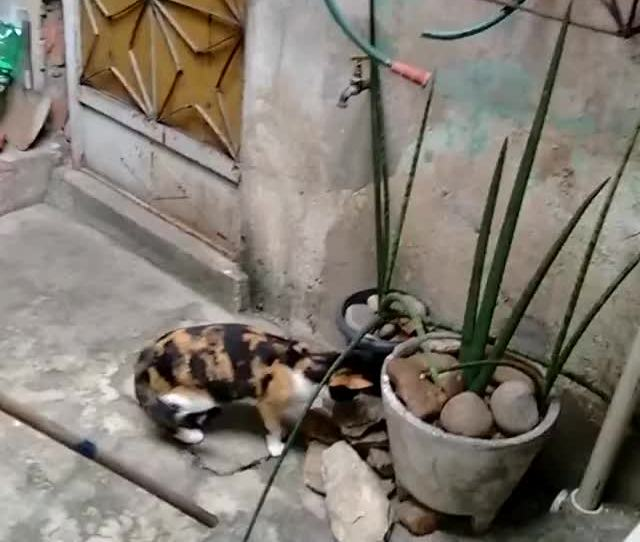 Watch Clever Mouse Escapes Cat Viralhog Gif By Slim Jones Slimjones123