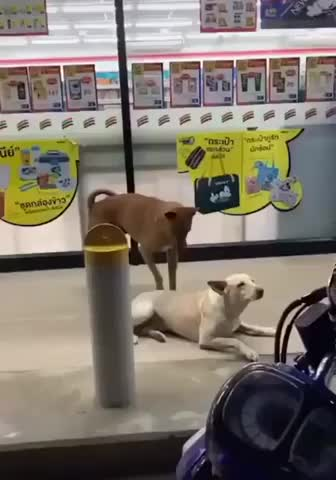 I'll help you bro