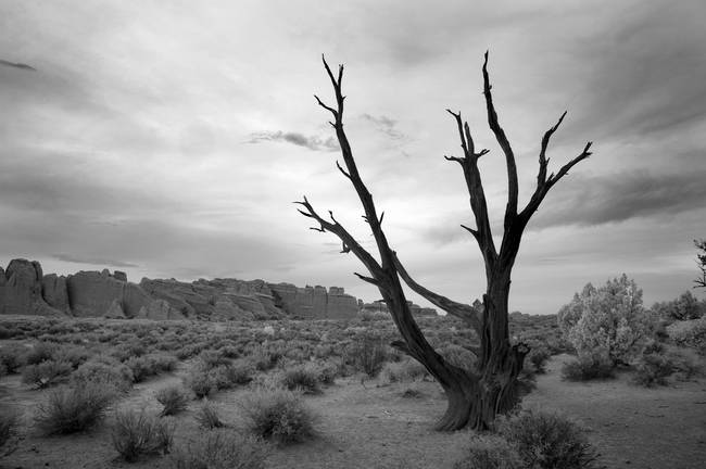 "stunning ""dead tree landscape"""