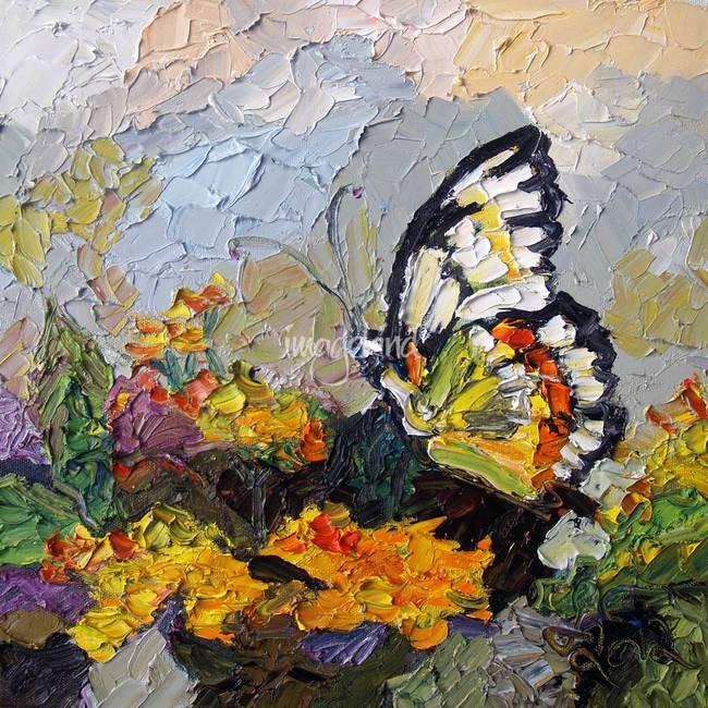 butterfly on lantana oil