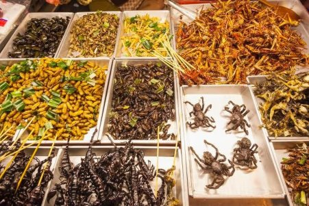 Image result for fried insects