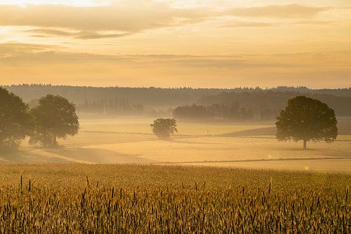 Gouden zonsopgang