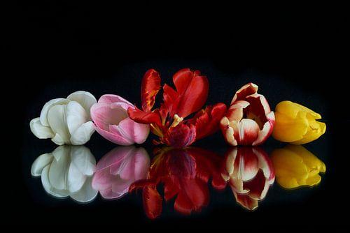 Tulpen boeket met reflectie 1
