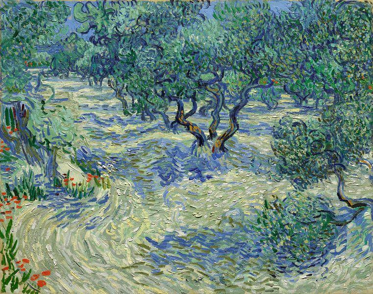 olivenhain vincent van gogh aus der kollektion alte meister