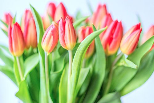 Spring is here II