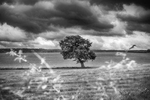 Zwart-wit landschap