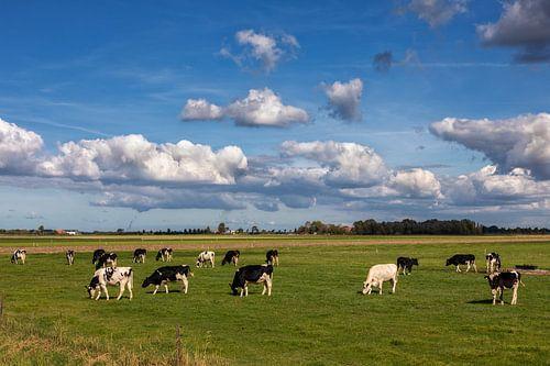 Koeien op een weiland in de buitenlucht