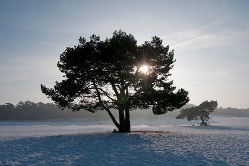 Winterochtend Soester Duinen