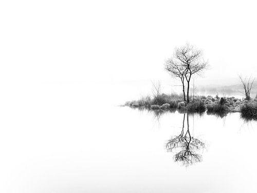 Twin trees,  again (zwart wit)