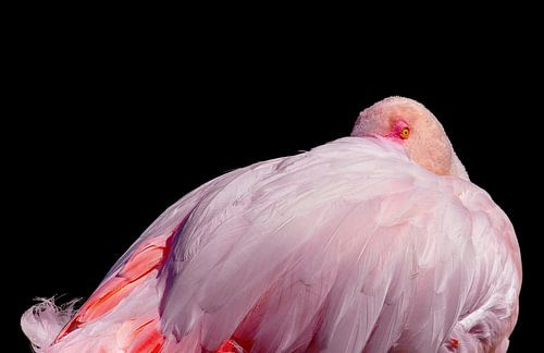 Flamingo in rust
