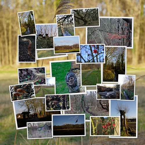 Collage natuur