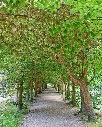 Baarnse Bos - romantisch wandelpad