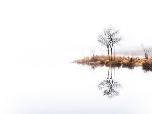 Twin trees,  again (kleur)