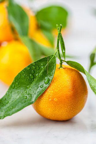 Verse mandarijn