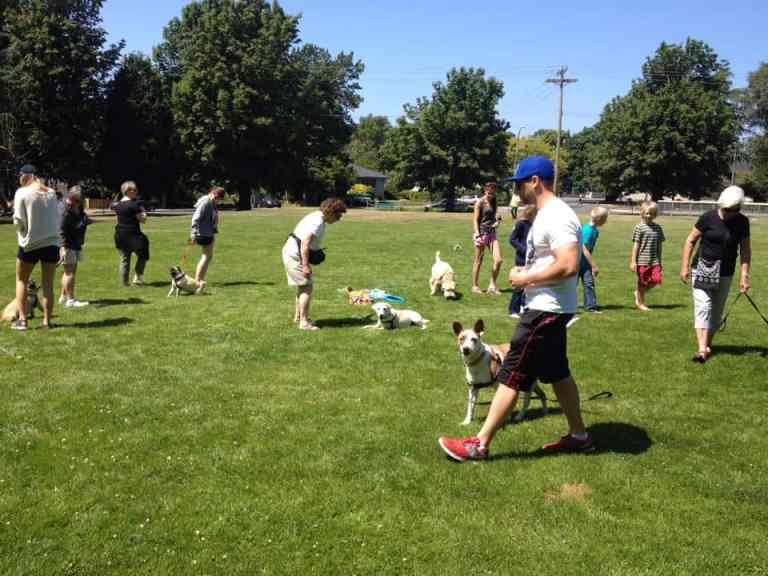Dog classes Victoria BC