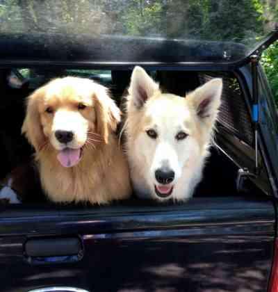 Dog Pack Walks
