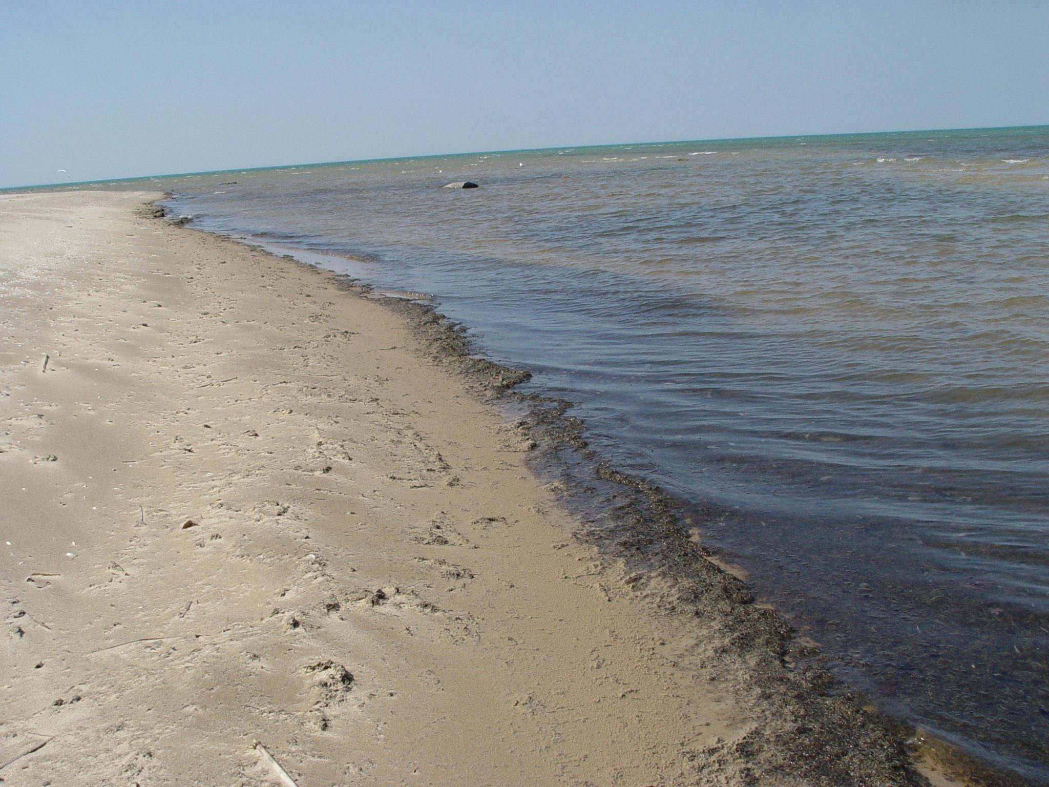 Saginaw Bay Pollution