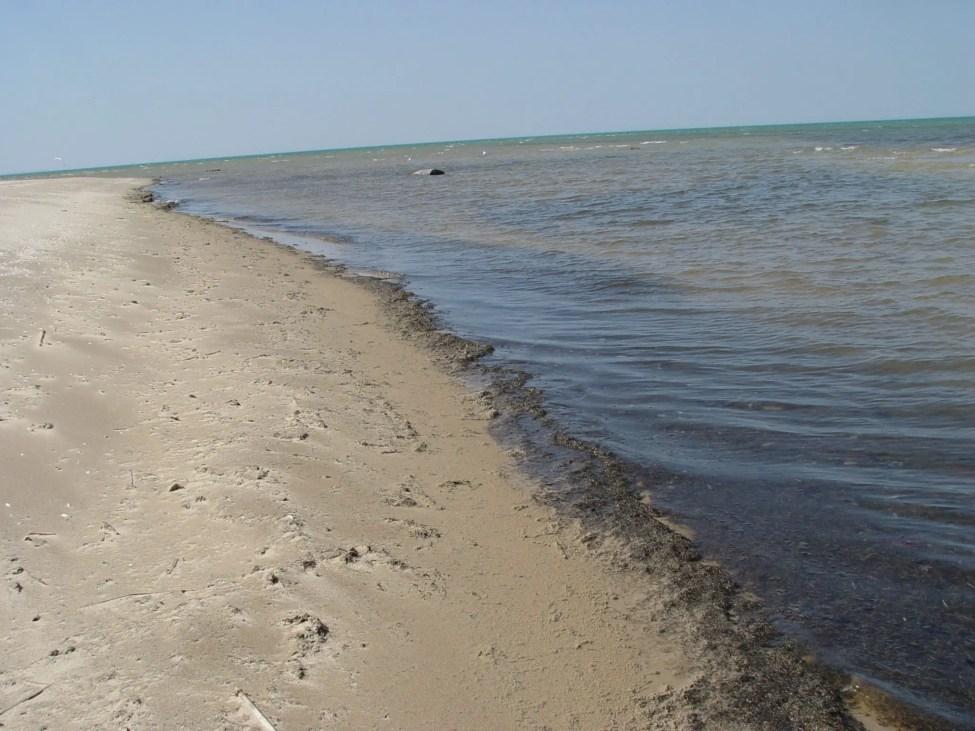 Lake Huron Muck on the Beach