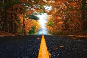 Autumn Color Along a Road