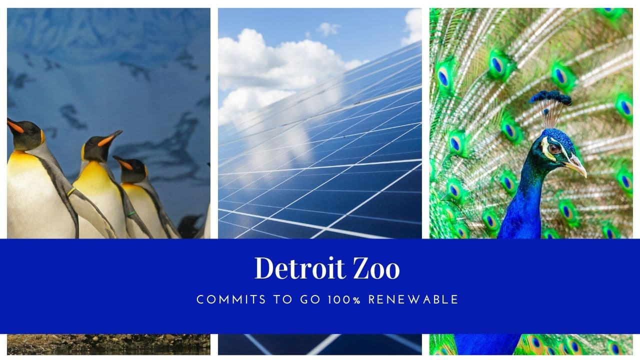 Detroit Zoo To Get 100 Michigan Renewable Energy Thumbwind