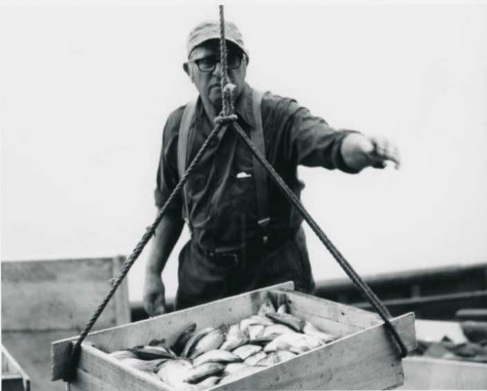 Fisherman unloading a box of fish 1976 in Bay Port