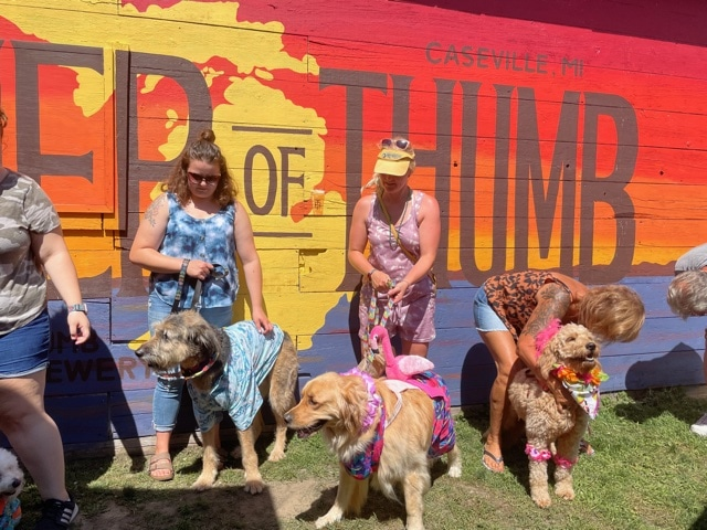 Dog Costume Contest at Thumb Brewery