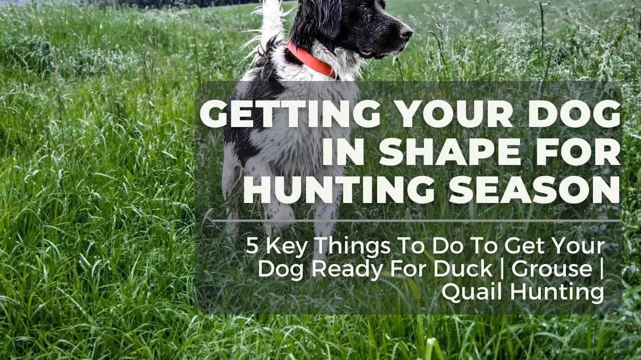 Hunting Dog Title