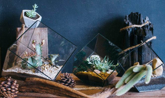 Tiny Forest Terrariums products