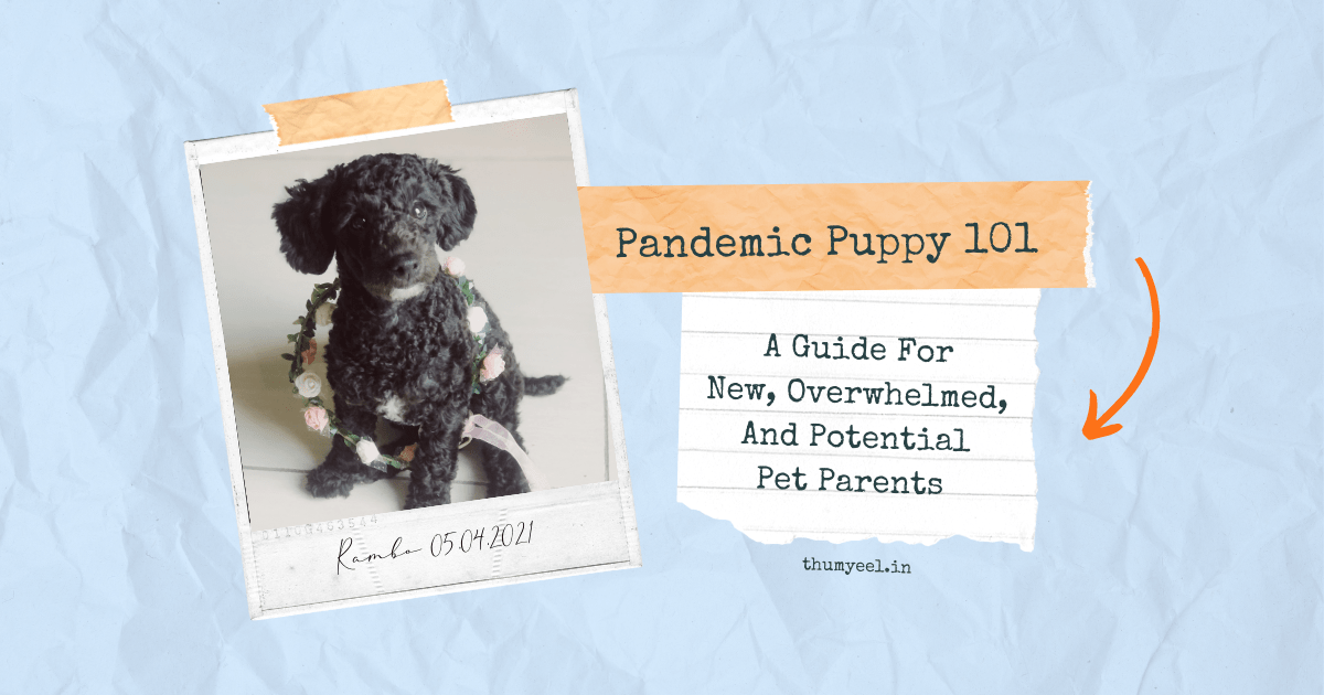 Pandemic Puppy 101 Guide For New, Overwhelmed And Potential Pet Dog Parents