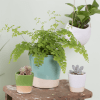 Sass & Belle - Mini Green Dip Glaze Planter