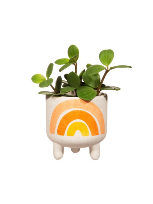 Sass & Belle - Mini Earth Rainbow Planter on Legs
